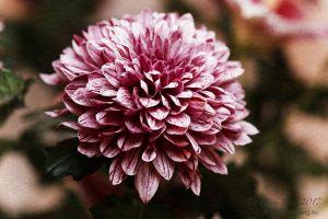 vietdung.eu-DinhDau-Flowers-02.jpg