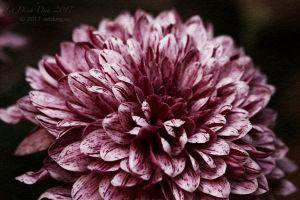 vietdung.eu-DinhDau-Flowers-05.jpg