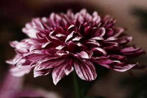 vietdung.eu-DinhDau-Flowers-06.jpg