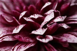 vietdung.eu-DinhDau-Flowers-07.jpg